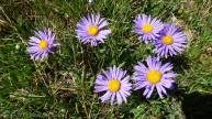 10 Asters
