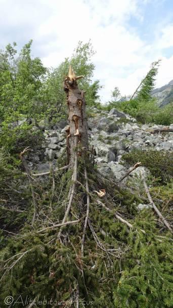 10 Broken tree