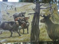 12 Stag