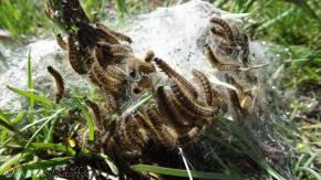 2 Caterpillars