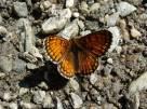 38 Unidentified orange butterfly