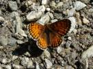 38 Unidentified orange butterfly