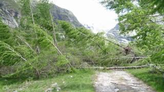 5 Fallen trees