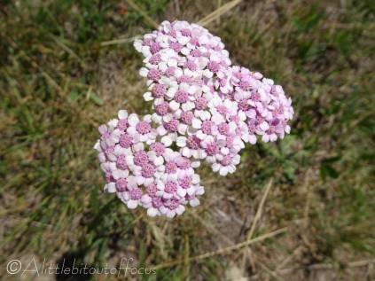 8 Beautiful pink and white flower