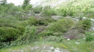 8 Flattened trees