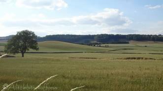 12 Rolling fields