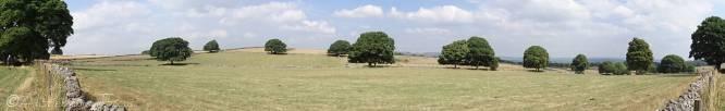 13 Trees