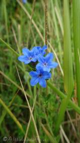 14 Blue flowers