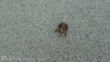 14 Tiny, tiny frog