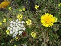17 Wild flowers