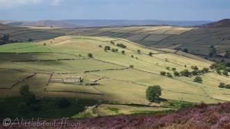 19 Sunlit fields