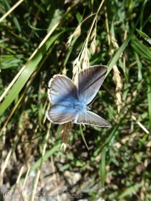 3 Blue butterfly