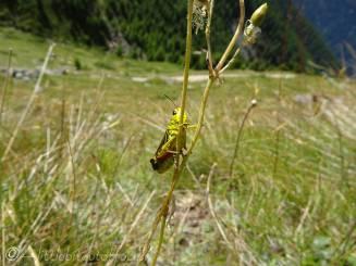 7 Grasshopper