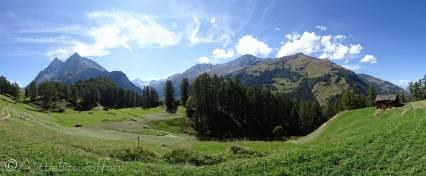 13 Alpine meadow