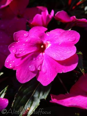 18 Bright Pink flowers