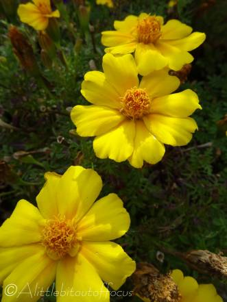 21 Yellow flowers