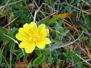 7 Yellow flower