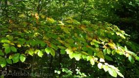 1 Autumn leaves