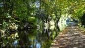 10 Leafy path