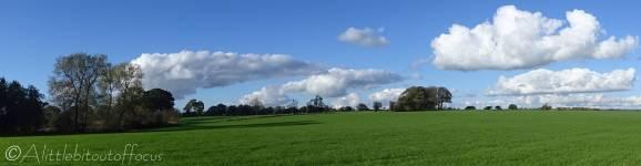 16 Green field