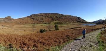 17 Lingmoor and Blea Tarn