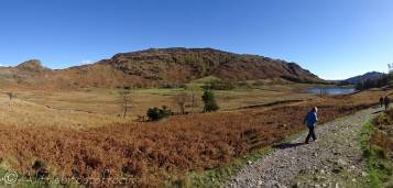 17 Lingmoor and Blea Tarn