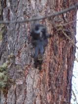 2 Squirrel