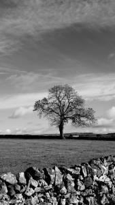 20 Tree (b&w)