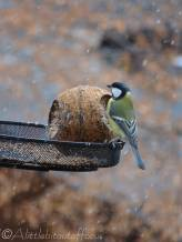 3 Great tit