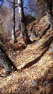 4 Leafy path