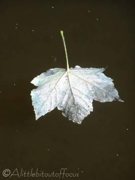 7 Floating leaf