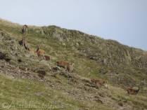 8 Deer