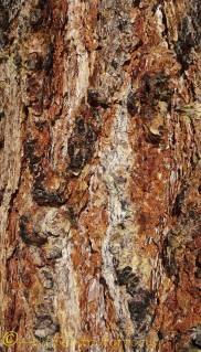 5 bark