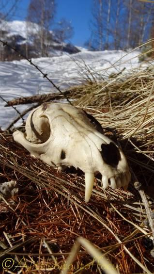 8 skull front