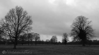 12 Trees (b&w)