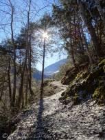 7 Leafy path