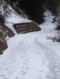 12 Snowy track