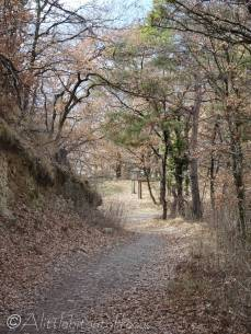 14 Path down
