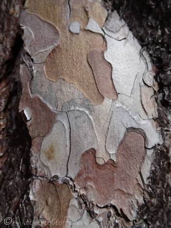 14 Tree bark