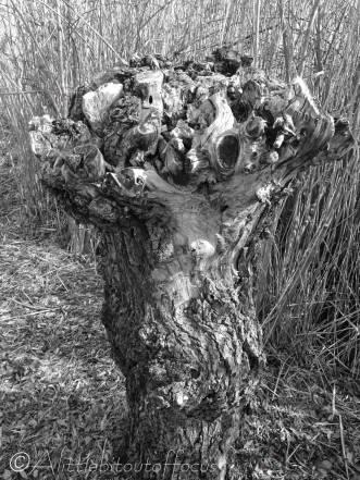 27 Gnarled tree stump (b&w)