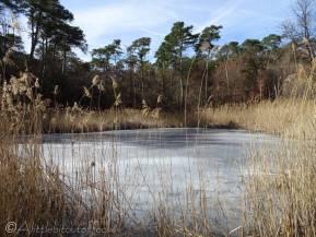 6 Frozen Pond