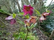 14 Unidentified flower