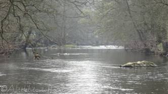 4 River Derwent