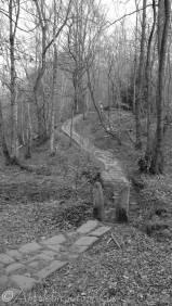 7 Horse Hay Coppice path (b&w)
