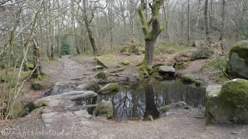 8 Tiny pond