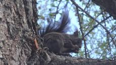 22 Squirrel