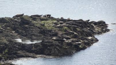 8 Seals