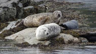 9 Seals