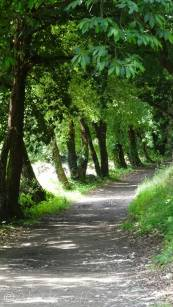 17 Typical Camino path