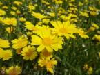 19 Yellow flowers